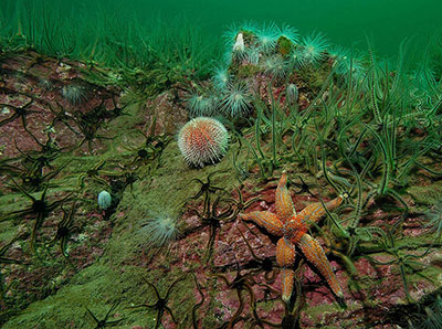 Urchins & Brittlestars by Paul Naylor